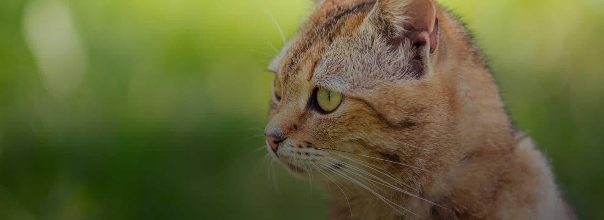 Neutralisering af kat